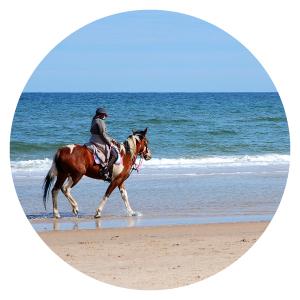 LMDLP-equitation